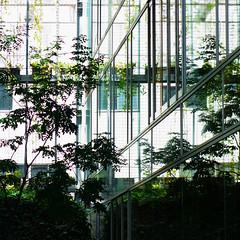 構成=Composition-180/In the forest of virtual images (kouichi_zen) Tags: reflection city architecture green leaves tree