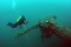 Scotland-201908-Orkney-Dive5-Coln-8-88mmGun (Tony J Gilbert) Tags: orkneys scotland scubadiving orkneyislands marine diving marinefish nikond300 60mmlens 105mmlens underwater underwaterphotography travel travelogue scottishtravel scottishscubadiving scottishlandscapes scottishwildlife