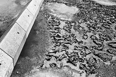 Spillern (Harald Reichmann) Tags: spillern autobahn becken beton wasser trockenheit kruste analog film nikonfm2 chaos ordnung struktur oberfläche muster schlamm