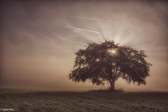 06092019-DSC_0092 (vidjanma) Tags: arbre arbresolitaire brume fagnoux matin rayons soleil solitaire
