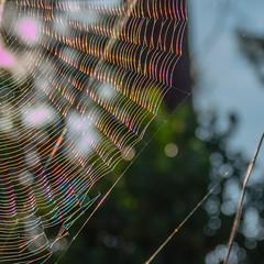 Rainbow web (Sylvie's Eye) Tags: web spider rainbow araignée arcenciel toile ares couleurs lumière toiledaraignée light