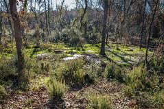 Daño irreparable (SantiMB.Photos) Tags: 2blog 2tumblr 2ig invierno winter tordera maresme bosque forest geo:lat=4171520277 geo:lon=272159123 geotagged cataluna españa