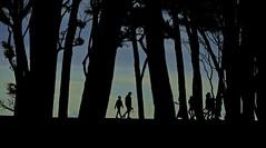 El sueño de una noche de verano (alfonsocarlospalencia) Tags: palacio de la magdalena santander sueño contraluz árboles paseo verano familia cielo niños viñetas ramas troncos líneas verticales recuerdos infancia siluetas contraste robado fantasmas nubes
