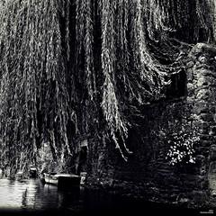 Sous le saule pleureur (Un jour en France) Tags: canoneos6dmarkii canonef1635mmf28liiusm saule arbre rivière barque paysage carré noiretblanc noiretblancfrance black