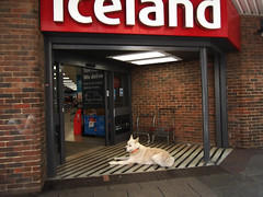 The wolf at the door (catrionatv) Tags: hampshire winchester lowerbrookstreet shop doorway paving tiles bricks walls doorframe doors baskets shopsign supermarket canine dog