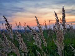 Evening in the field (Alexx053) Tags: olympus40150f4056 em10iii olympus outdoor sunset cloud sky evening