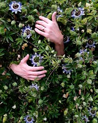 In harmony with nature (kuratormkl) Tags: nature people abstract harmony beauty hand passionflowers