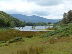 Lake Cynwch (Marit Buelens) Tags: eu uk britain wales cymru snowdonia dolgellau llanfachred lake sheep water clouds tree mountain walk trail track hiking fern llyncynwch lakecynwch sky