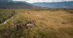 Horses of Washoe Valley