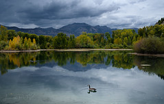 GOLDEN POND (laura's Point of View) Tags: autumn pond aspens trees fall color water nature landscape waterscape canadagoose storm sky clouds mountains tetons jacksonhole wyoming unitedstates west western lauraspov lauraspointofview beauty