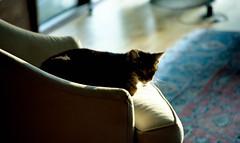 cat (bluebird87) Tags: cat nikon f5 film dx0 c41 epson v800 kodak ektar lightroom jobo