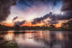 Dusk with a visitor (DonMiller_ToGo) Tags: gator sunriselovers sunrise dusk water d810 nik lakes rookery skyscape skypainter