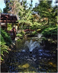 The Waterway | Dinah's Garden Hotel | Palo Alto, California (steveartist) Tags: water waterway fountains bridges foliage ducks koi sonydscwx220 photostevefrenkel trees rocks snapseed paloalto california