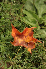 Leaf (historygradguy (jobhunting)) Tags: easton ny newyork upstate washingtoncounty leaf leaves fallcolors autumn