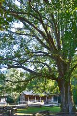 Great Smoky Mountains NP | DSC_0542 (Kaemattson) Tags: greatsmokymountainsnationalpark greatsmokymountains np mountains blueridgemountains appalachianmountain appalachiantrail trail hiking tennessee tn townsendtn cadescove