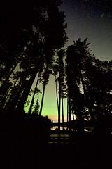 Aurora through trees (John Andersen (JPAndersen images)) Tags: alberta aurora night sky kananaskis canon laowa