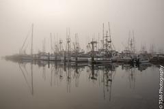 IMGP0249 (blackcloudbrew) Tags: pentaxk1ii bodegabay dfa2470 fog morning reflections california unitedstatesofamerica