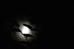 Flickr Friday: La lune, compagne de plusieurs rituels et rythmes (Jean-Pierre Bérubé) Tags: moon lune lumière light ritual rites flickrfriday jeanpierrebérubé jpdu12 nikon d5300 satellite