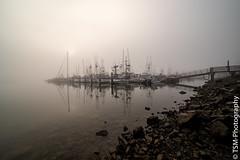 IMGP0250 (blackcloudbrew) Tags: laowa12 pentaxk1ii bodegabay fog morning reflections california unitedstatesofamerica