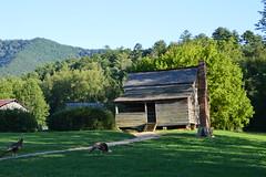 Great Smoky Mountains NP | DSC_0554 (Kaemattson) Tags: greatsmokymountainsnationalpark greatsmokymountains np mountains blueridgemountains appalachianmountain appalachiantrail trail hiking tennessee tn townsendtn cadescove