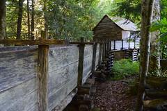 Great Smoky Mountains NP | DSC_0523 (Kaemattson) Tags: greatsmokymountainsnationalpark greatsmokymountains np mountains blueridgemountains appalachianmountain appalachiantrail trail hiking tennessee tn townsendtn cadescove