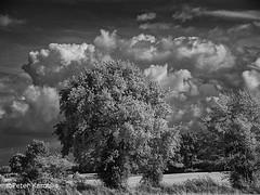 Norddeutschland / North German landscape (peterkaroblis) Tags: schwarzweis blackandwhite infrarot infrared landschaft landscape germany norddeutschland schleswigholstein baum tree wolken clouds