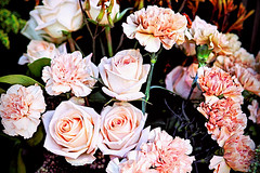 Rosas y claveles (Fnikos) Tags: flower flowers flor flores fiore fiori rose carnation nature naturaleza natura leaf leaves color colour colores colours colors dark light shadow shadows dof depth depthoffield bokeh outside outdoor