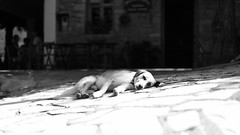 Dog days are over... (Michael Kalognomos) Tags: dog summerends canon canoneos5dmarkiii ef50mmf12lusm potidania village greece nap bokeh dof depthoffield blackandwhite bw street streetstories streetlife streetphotography cinematography animal