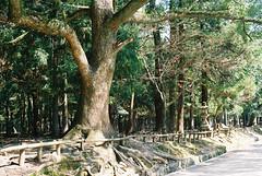 (Kkeina) Tags: film analog manual 35mm 50mm olympus om om1 japan nara spring nature park