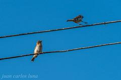 PAJARITOS (juan carlos luna monfort) Tags: rumania romania calatani bihor ave aves birds bird pajaro nikond810 sigma150500 calma paz tranquilidad