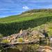 Kleiner angelegter Teich mit Seerosenblättern, Steinumrandung und Wasserfall, in Mayschoß nahe Bonn