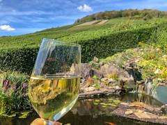 Hand hält ein gefülltes Glas nach oben, mit grüner Natur und Wasser im Hintergrund