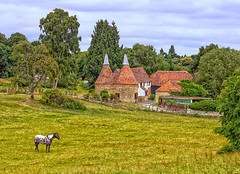 Oast House, Kent, England (Ray in Manila) Tags: oast kent road horse house green grass barn countryside conversion kiln hops gardenofengland eos650d beer stowage oasthouse building architecture cowl tree england rural europe unitedkingdom scenic