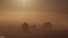 06092019-DSC_0051 (vidjanma) Tags: arbres brume ciel fagnoux matin éoliennes