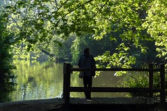 Taking in the scene ((Sue Lockhart Images)) Tags: silhouette reflection figure lake leaves trees green bridge morninglight ngysaex