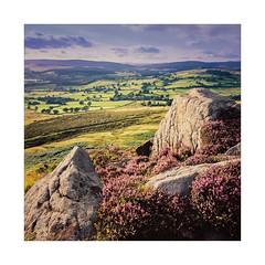 Moor to Moor (gerainte1) Tags: hasselblad501 film portra160 colour yorkshire moor heather flowers ll
