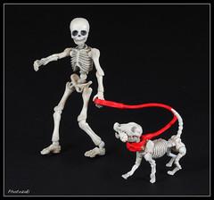 "The Dog Walk Ritual (photozaki) Tags: ""flickrfriday"" ""ritual"" ""ritual dog walk"" ""dog skeleton skeleton"" inu ""close up"" macro ritual model olympus ""olympus omd em5 mk2"""