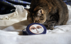 Alice and the ceramic box (Alfredo Liverani) Tags: happycaturday cat cats gato happy caturday location canon m50 eos eosm50 canoneosm50 eoskissm canonm50 pointandshoot point shoot ps flickrdigital flickr digital camera cameras europa europe italia italy italien italie emiliaromagna romagna faenza faventia faience animal kitten gatto gatta gatti gatte chats chat katze katzen gatos pet pets tabby furry kitty moggy moggies gattino animale ininterni animaledomestico aliceellen alice ellen sonntagstierchen sonntag sunday fauna anumals sundayanimals st 7dwfst
