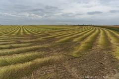 Rouïssage (Spotmatix) Tags: 1650mm camera countryside farming landscape lens nex6 sony zoomstd