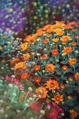 Garden Colour Abstract (Gareth Wonfor (TempusVolat)) Tags: picmonkey garden flowers art arty colours colour color bright abstract garethwonfor tempusvolat mrmorodo gareth wonfor tempus volat flare lightflare