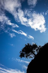 Tree on a Hill (Karen_Chappell) Tags: tree blue black white clouds sky nature one silhouette flatrock canada eastcoast avalonpeninsula atlanticcanada outdoors landscape eastcoasttrail hill