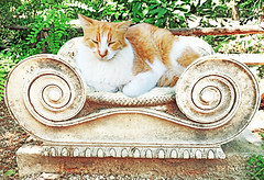 It's hard not to put cats on a pedestal (kirstiecat) Tags: athens greece pedestal architecture cat chat gato caturday feline kitty γάτα streetcat