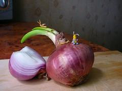 57-snail 12mm + onion (1) (tinyteensdolls) Tags: amigurumi crochet craft crochetmini crochettoy crochetminiature miniature microcrochet mini minicrochet micro miniamigurumi toy tinyamigurumi tiny threadcrochet handmade small