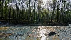 \\||// (Poria) Tags: nature view landscape tree river jungle forest light sun sky travel iran persia