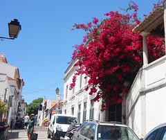 Cascais (Kaeko) Tags: trip travel vacation holiday portugal lisbon resort cascais europe street people flower car