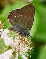 Butterfly (Geoff Fagan) Tags: butterfly butterflymacro insect insects insecto handheld macro macrodreams macrophotography near close closeup summer italy sony sonyalpha sonya7rm2 sonya7rii ilce7rm2 90mm