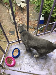 Tiger looks outside (artnoose) Tags: backyard cat tabby grey gray stairway spiral purple tiger