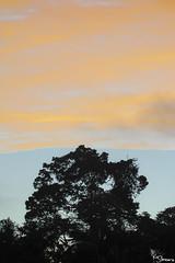 Sandoval lake (Kusi Seminario) Tags: paisaje landscape sunset lake lago sky clouds nubes nature outdoors rainforest selva jungle tambopata sandoval madrededios peru southamerica sudamerica canon eos 7dmarkii