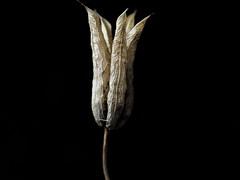 Flowerart (roger.connysson) Tags: flower art closeup macro olympus omd still beautiful autumn dry