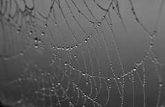 * (PattyK.) Tags: snapseed nikond3100 drops raindrops monochrome blackandwhite spiderweb ιστόσ σταγόνεσ άσπροκαιμαύρο βροχή rain ioannina giannena ιωάννινα ελλάδα greece grecia griechenland ellada
